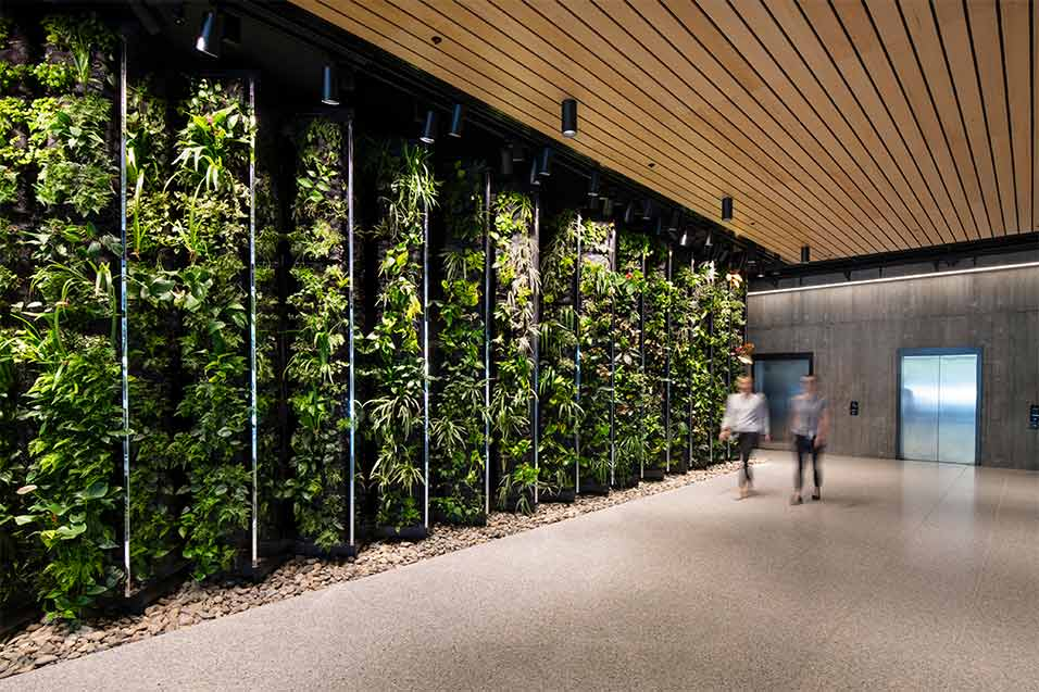 aurecon foyer green wall